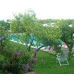 la piscina vicinissima e quasi nascosta dal bel giardino