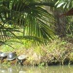 Las tortugas, por fin posaron...