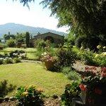 Villa Baldelli garden, Cortona on horizon