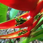 Tropical flowers and banana trees on property