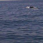 delfines!!