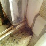 mold in bathroom corner