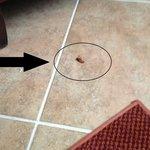 Dead Roach!