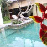 Fresh flowers in the pool garden