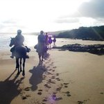Close to nature, experience a horse ride on the beach.