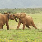 A stones's throw from the famous Addo Elephant park and numerous other game reserves.