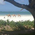 Lantana Galu Beach Photo