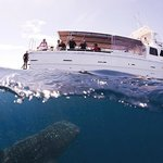 Ningaloo Reef Dive
