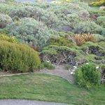 Closeup of landscaping