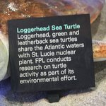 Learning about Loggerheads at the EE