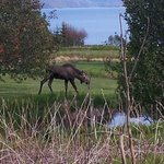 Our view w/ our moose friend walking through