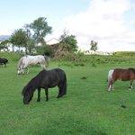 die kleine Pferdeherde von Gut Royum