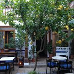 Beautiful lemon tree in the courtyard!