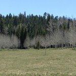 Kaibab Nat'l Forest
