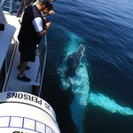 Up close and personal, a humpback whale enjoying our bow-wave, getting a free ride.