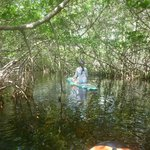 Navigating through the mangroves