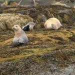Seals on Egg Rock © 2013 Ted Denman