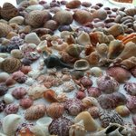 Treasures from shelling
