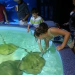 petting sting ray