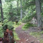Surrounding nature trail