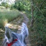 Trail at Bennington Lake