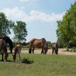 Horses near the Cycle Centre, Burley