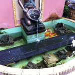 Little fountain with fish near plunge pool