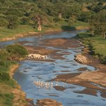 Tarangire river with storks