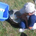 la preparazione del tomino