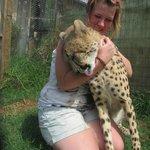 Indi the Cheetah