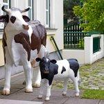 Unsere Kühe beim Eingangs Bereich