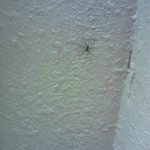 SPIDER (ONE OF 5 KILLED)