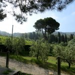view from driveway of Il Palagio
