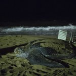 visit from a sea turtle at night