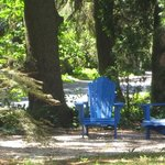 Blue chairs under the spruce...