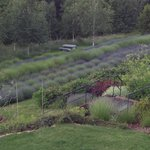 view of lavender from the porch