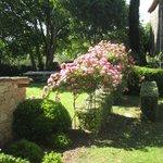 Prachtige tuin (rozen)