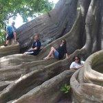 The 200 year old Oak Tree.