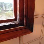 Rotten Bathroom Window