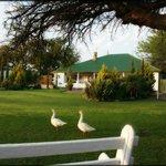 Foto di Olive Grove Guest Farm