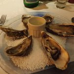 excellent oysters