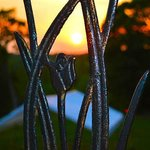 Sunset through the trellis