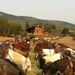 Dinner time for the horses
