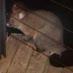 Visting Possum