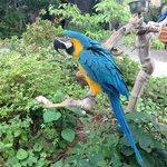 Rudy the bird!