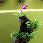 Plants on wall at Febri's