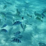 Snorkeling with Kia Orana Cruises