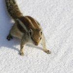Mr Squirrel
