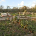 Well stocked Vegetable patch