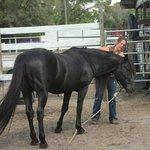 Wild Horse Rescue Center